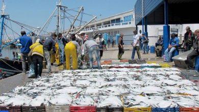 الصويرة.. ارتفاع الكميات المفرغة من منتوجات الصيد الساحلي والتقليدي