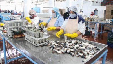 صناعة تعليب السمك