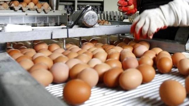 بنجرير.. اعتقال مستخدمة بوحدة لإنتاج البيض بعد سرقة 60 بيضة، ومالك الضعية يوضح الحيثيات