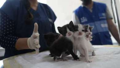 كوريا الجنوبية تعلن إصابة قطّة بفيروس كورونا