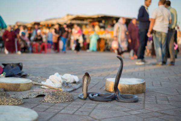 عودة الحياة للحركة الاقتصادية والسياحية والثقافية بساحة جامع الفنا